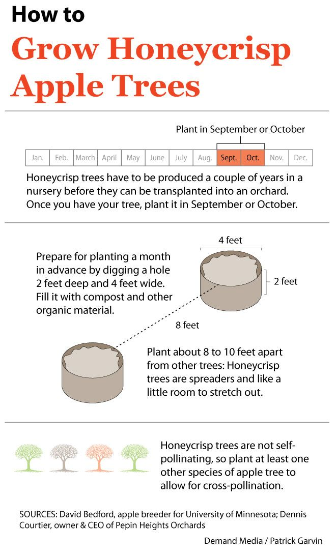 How to Grow Honeycrisp Apple Trees | eHow.com, John and I planted two last summer. So excited!