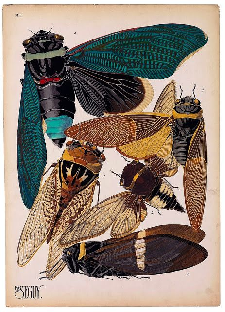 Vintage insect illustrations by Eugène Séguy (via librarian tells all)