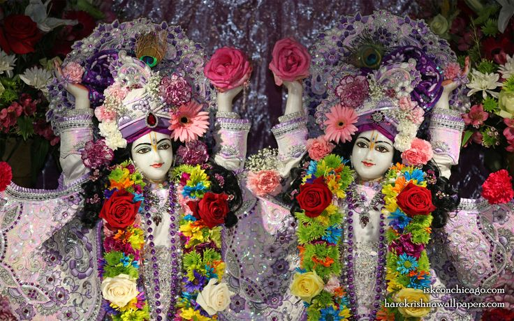 To view Gaura Nitai with Acharyas Wallpaper of ISKCON Chicago in difference sizes visit - http://harekrishnawallpapers.com/sri-sri-gaura-nitai-with-acharyas-iskcon-chicago-wallpaper-003/