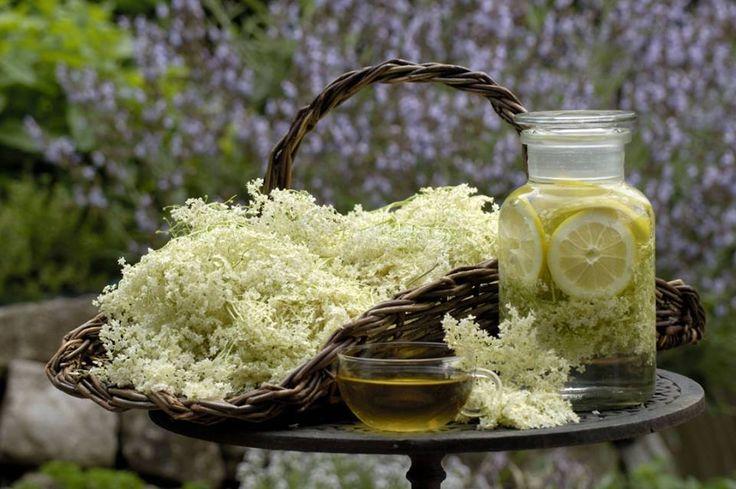 Wertvolle Blüten- Rezeptideen mit #Holunder  Holunderbüsche bieten zweimal im Jahr reichliche Ernte. Im Frühling verlockt ihre Blüte zur Nutzung bei allerlei Anwendungen. Im Spätsommer sind es die Beeren, die mit ihrem Saft interessante Möglichkeiten eröffnen.Mehr dazu auf: http://www.bz-berlin.de/ratgeber/ernaehrung/rezeptideen-mit-holunder