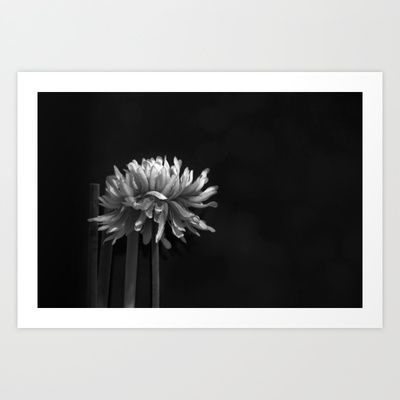 Dead Flower Art Print by marialivia16 - $14.04
