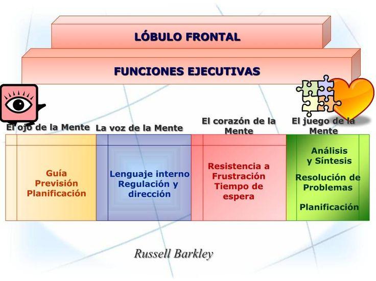 funciones ejecutivas del lobulo frontal