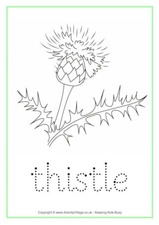 Thistle Tracing Worksheet