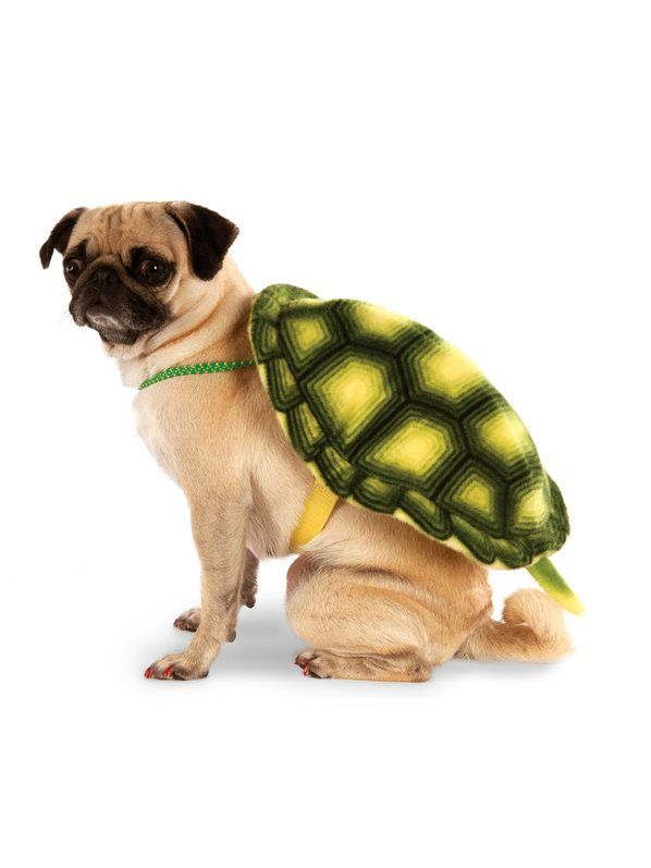 Check Out Turtle Shell Pet Costume Dog And Cat Costumes For 2018
