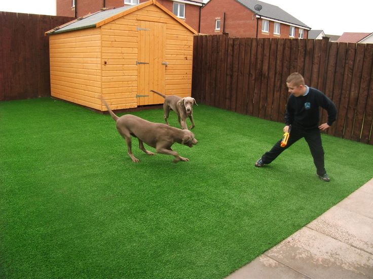 dogs bathroom grass. the highest quality artificial grass for pets artificial grass is the ultimate\u2026 dogs bathroom o