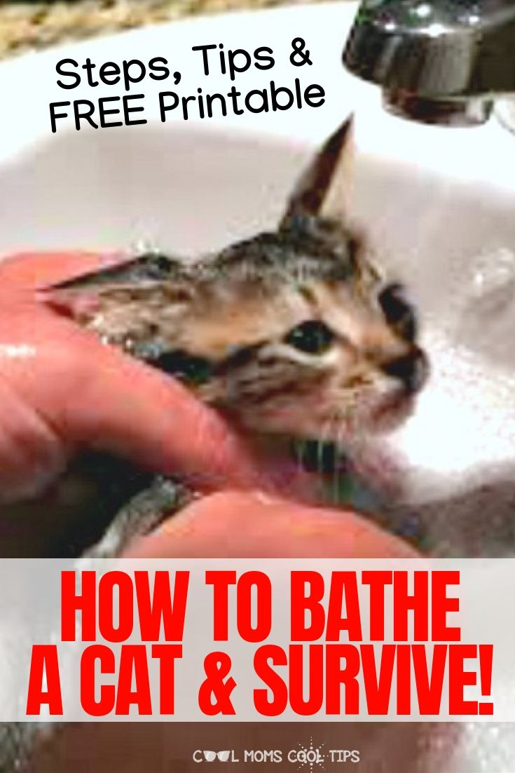 How To Bathe A Cat And Survive Process And Supply List Printable Cats Cat Bath Cat Printable