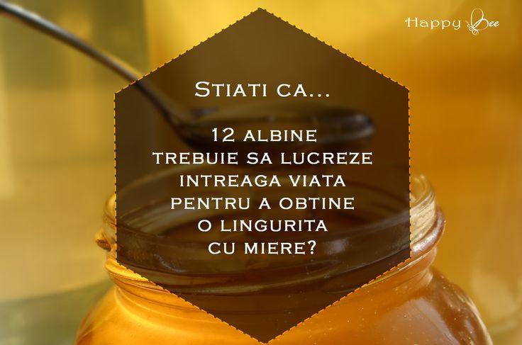 Știați că...  12 albine trebuie să lucreze întreaga viață pentru a obține o linguriță cu miere?