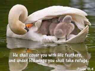 He shall cover you with His feathers, and under His wings you shall take refuge.   -Psalm 91:4