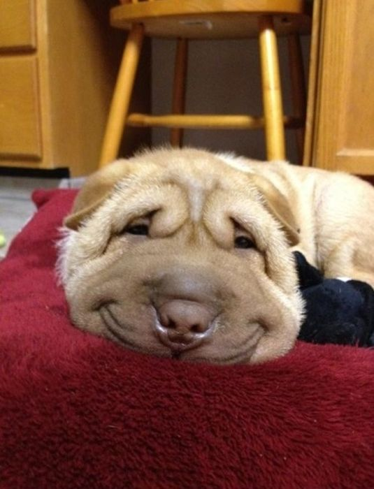 Funny Dog - 28 Pictures