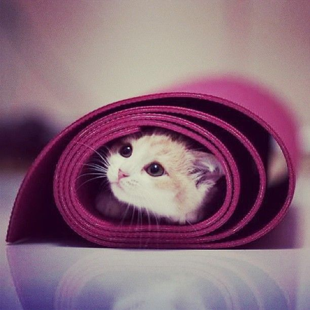 Awe! My two favorite things... Yoga and cats!