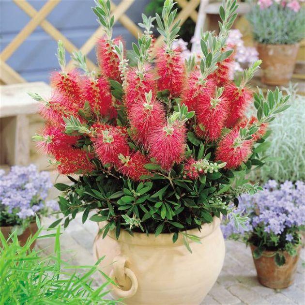 Необычные цветы, топ 11 невероятных растений