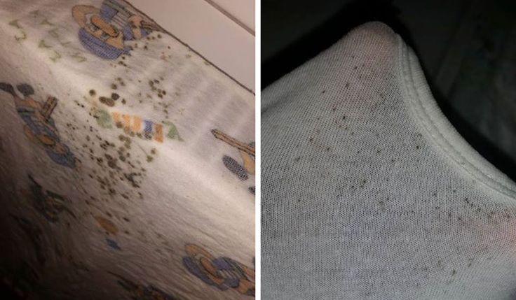 Wie lassen sich Stockflecken aus weißer Wäsche entfernen?