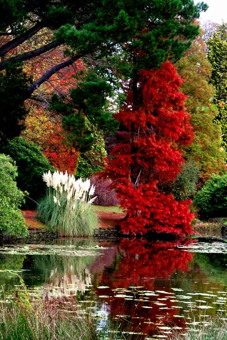 I love this with my water plants and my koi fish..love the pampas grass and the tree, pond can be smaller, don't need this big of one.