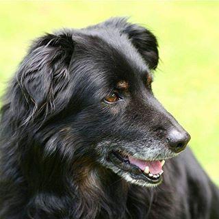A velhice dos cães costuma chegar por volta dos 8 ou 9 anos de idade, apesar de variar para cada caso. Cães de raças grandes já podem ser considerados velhinhos com 8 anos, enquanto vira-latas, por exemplo, podem passar dos 15 anos de idade, alongando a chegada da velhice. Acesse o link e saiba mais: http://petfisio.com.br/cachorro-idoso/