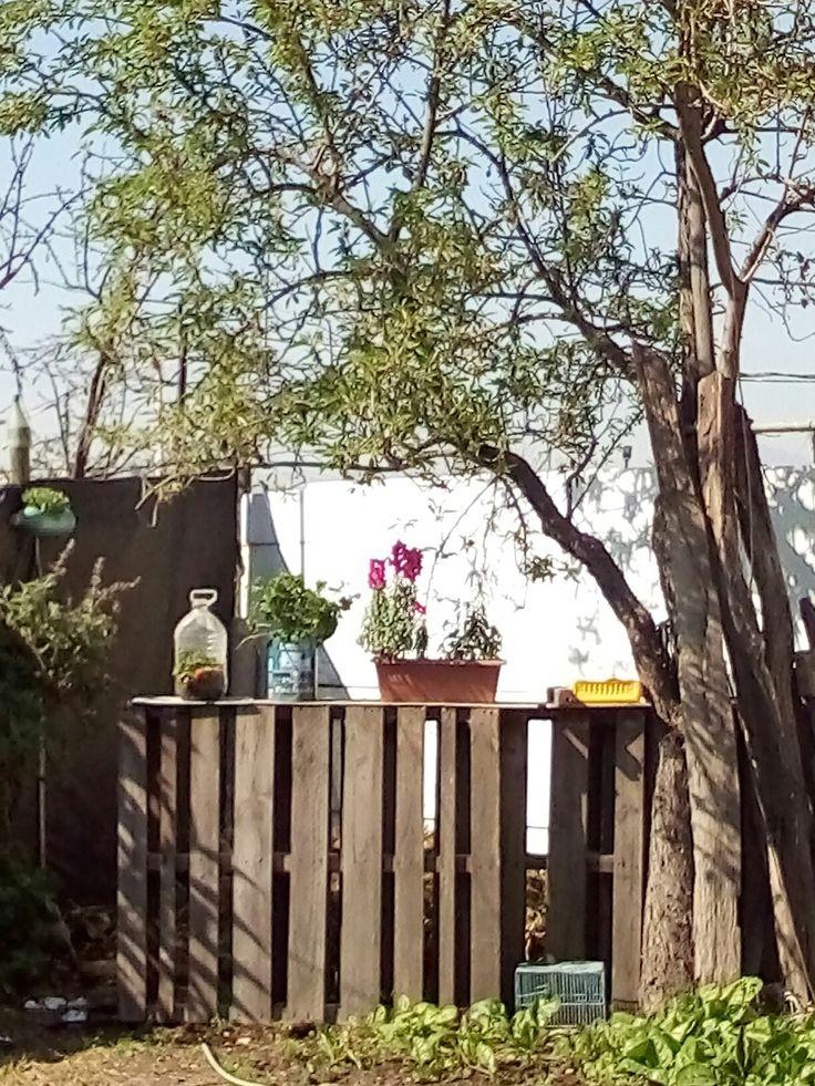 #reciclaje #naturaleza #casapapás # flores #regaloneos