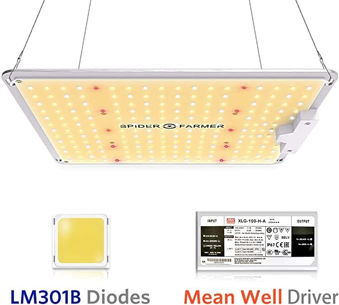Amazon Com Spider Farmer Sf 1000 Led Grow Light With Lm301b Diodes Dimmable Meanwell Driver Sunlike Full In 2020 Grow Lights For Plants Led Grow Lights Grow Lights