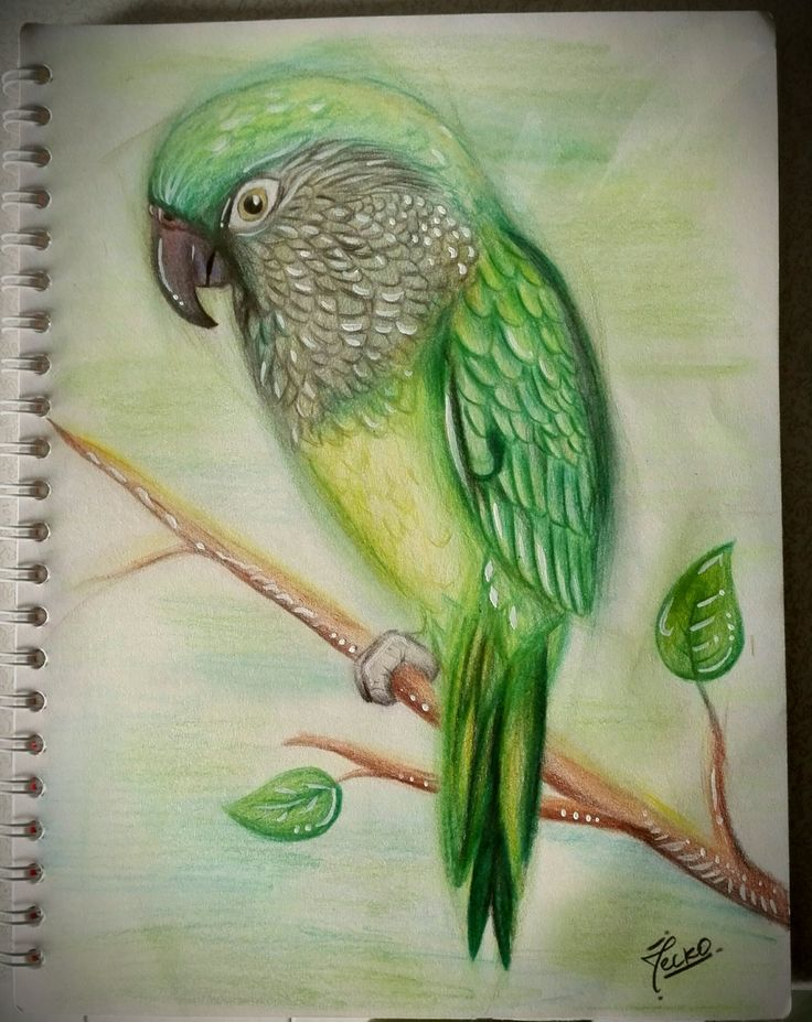 #bird #colorpencil