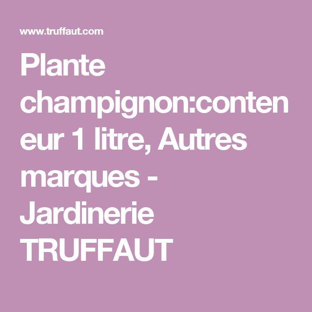 Plante champignon:conteneur 1 litre, Autres marques - Jardinerie TRUFFAUT