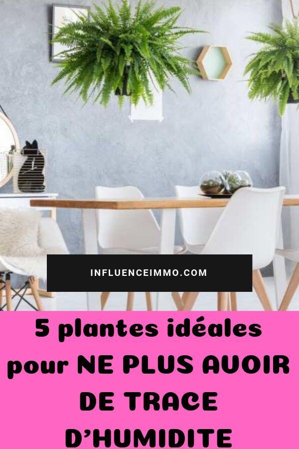 5 Plantes Qui Absorbent L Humidite De Toutes Les Pieces Plante Salle De Bain Plante Astuce Jardin