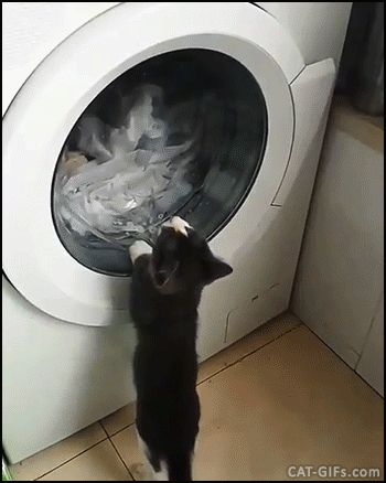 KITTEN GIF • Kitty fascinated by washing machine. May be he wants to catch his blanket