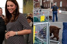 Royal baby news: Has Kate Middleton gone into labour? Police and sniffer dog spotted outside Lindo Wing - Mirror Online