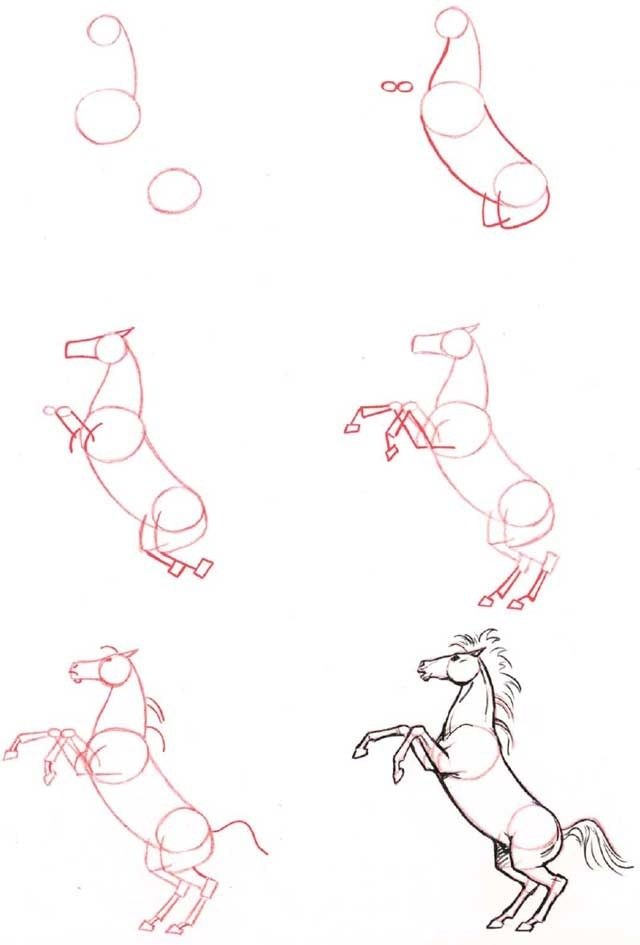 How to draw a horse rearing