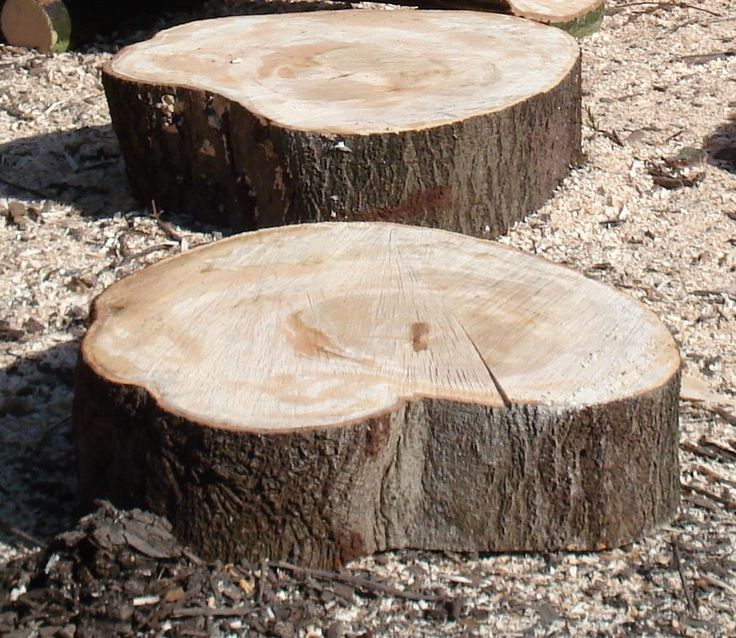 Tree Slices For Garden Path Log Slices Stepping Stones