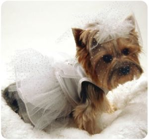 Wedding gowns for dogs! if i do have a wedding... lucy will def be wearing a dress too!