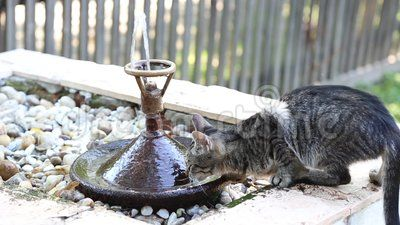 Kitty drinking from water fountain.