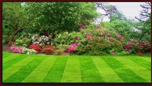 lawn-mowing-service-rates