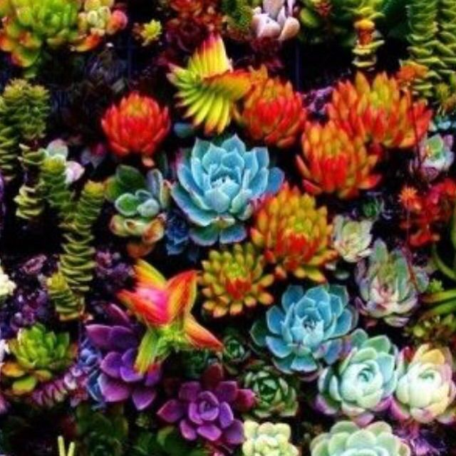 77 Best Images About Propagating Succulents On Pinterest
