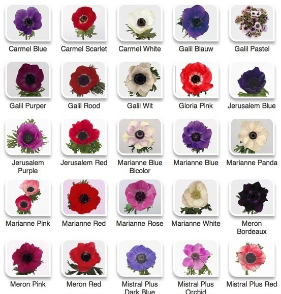 flower chart | Flower Candy & Color Charts...Amy's Florist ...