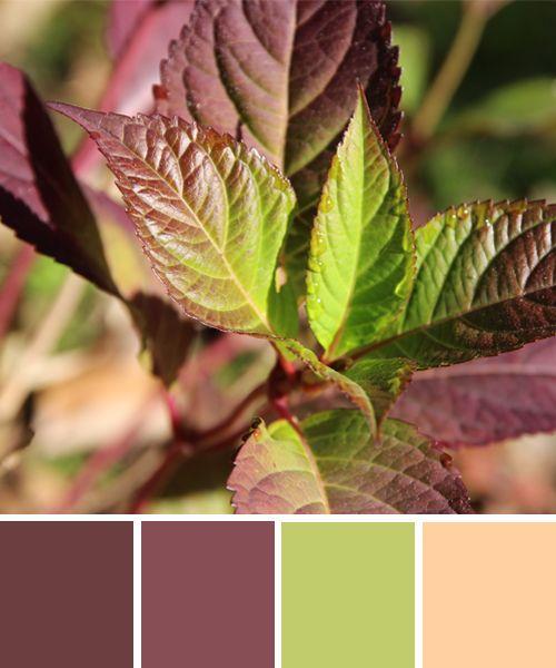 farbinspirationen aus der natur herbstfarben aubergine und gr n k che pinterest. Black Bedroom Furniture Sets. Home Design Ideas