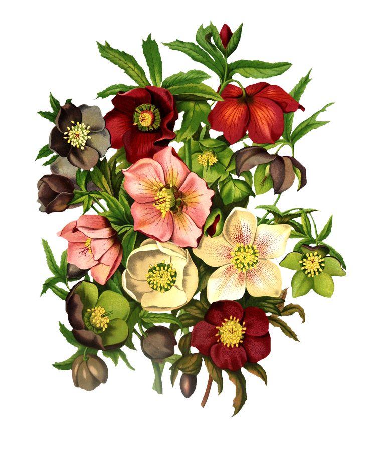 Открытки, картинка с цветами рисунок