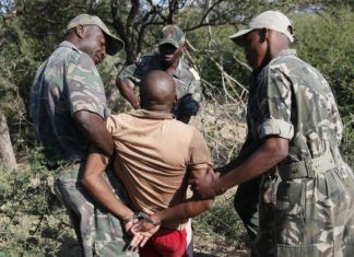 VICTORY! Eighteen Rhino Poachers Arrested In South Africa's Kruger National Park