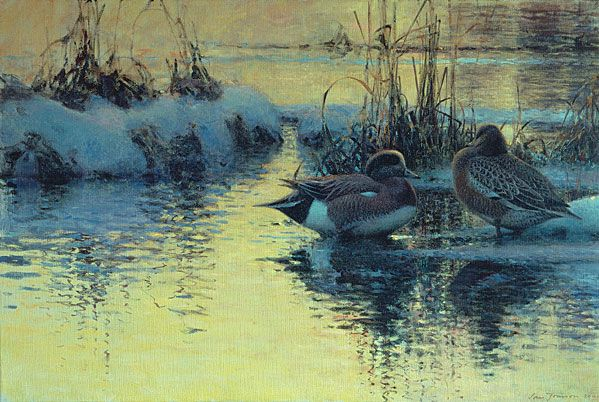 Settled for the Night (American Widgeons) - Lars Jonsson - oil on canvas