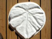 SS-1000-01 - SS-1000-01 - 18x18x2 Tropical Leaf Stepping Stone Mold+ F/S