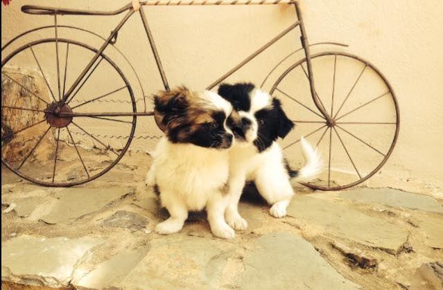 Η οικογένεια της Κρήσσας Γειτονίας μόλις αυξήθηκε κατά 2 μέλη!! / The #Cressa family just grew by 2 members!! www.cressa.gr #crete, #puppets, #dogs