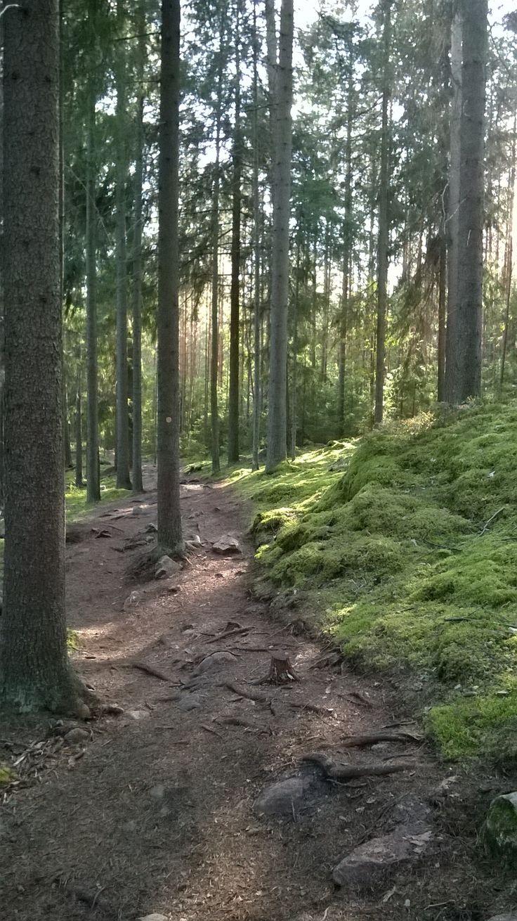 Repovesi national park Finland