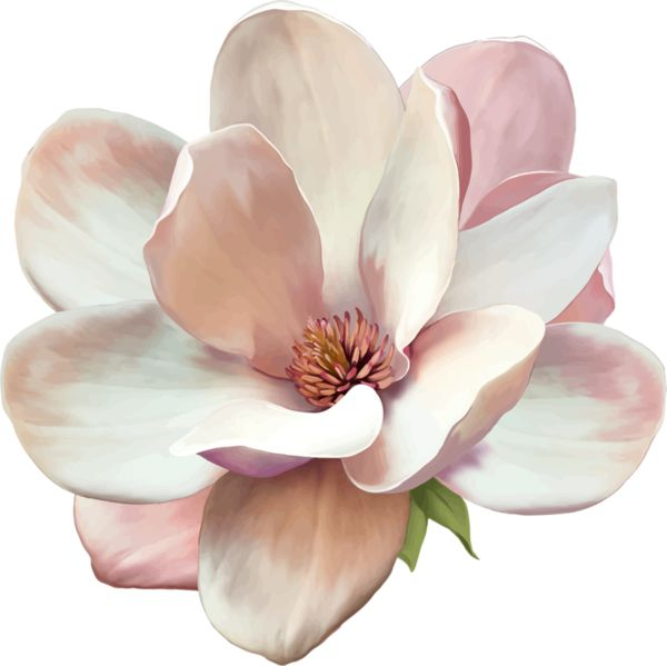 Pin By Jefita On Clipart Variety Magnolia Tattoo Flowers