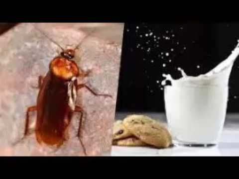 9 best Fini les petites bêtes images on Pinterest Insects, Tips