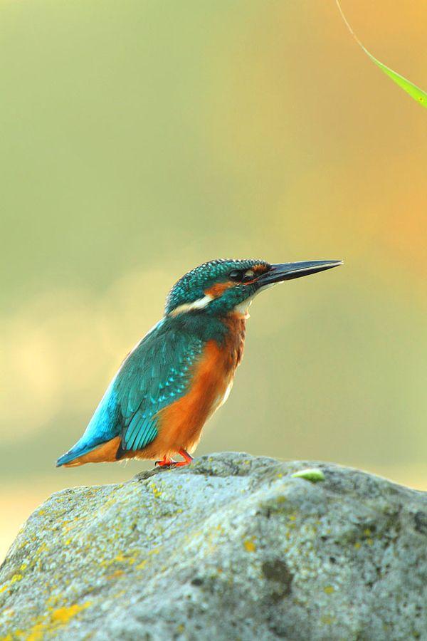 Kingfisher rocks by Jordi Strijdhorst on 500px