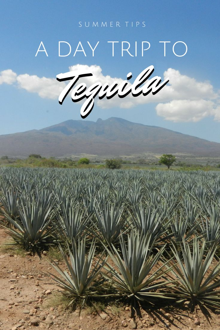 Thinking about going to Tequila? Read what you should do there! #Mexico #Jalisco #Tequila #Agave #DayTrip #Guadalajara
