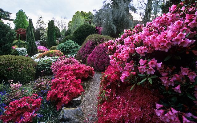 Leonardslee Gardens, Lower Beeding, West Sussex, UK, RH13 6PP | Leonardslee Rock Garden with pink flowering Japanese azaleas and rhododendrons in May (1 of 14) by ukgardenphotos, via Flickr