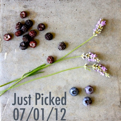 Early summer berries with lavender.