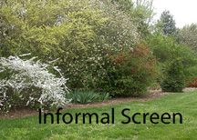 Informal privacy screen - doesn't require trimming. Besides being less work, informal hedges can afford greater visual interest. Many bloom in spring or glow with color in fall. They can also supply food and shelter for birds and wildlife, they can buffer noise, and they make excellent windbreaks.