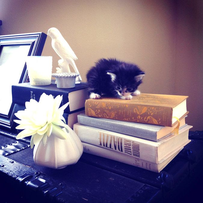 Fofinho!: Kittens Photography, Animal Lovers, Literary Cat, Intellectual Kittens, Adorable Kittens, Black Kittens, Book Appreciation, Cat Black, Decor Accessories