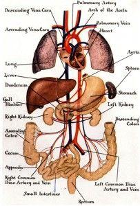 130 best anatomy images on Pinterest