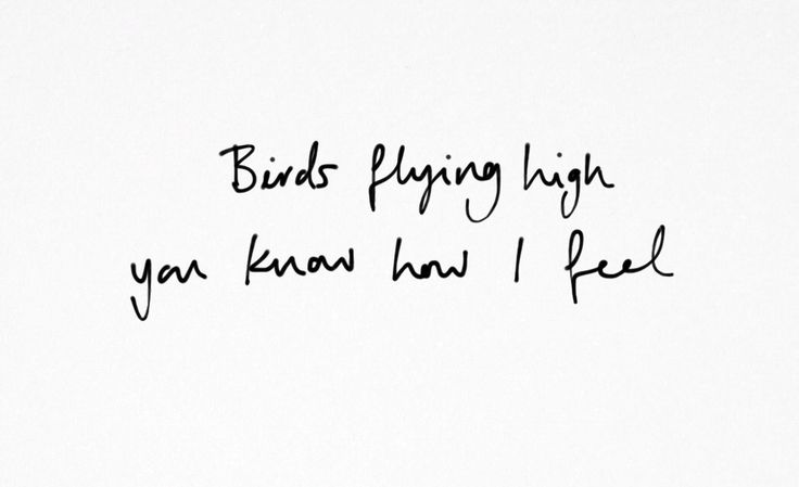 Little Bee Dreams - lyricscity:   Nina Simone - Feeling Good