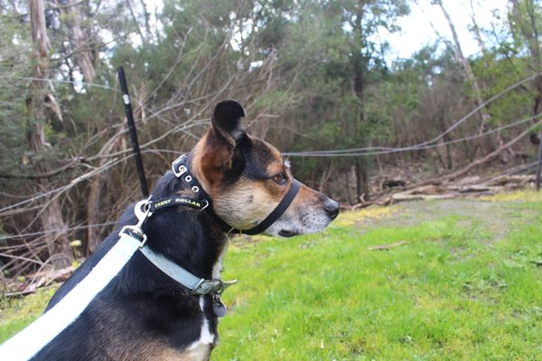 Map of dog friendly camping and hiking destinations around Australia.